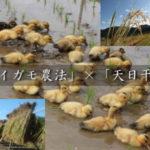 おうちde宅配アイガモ農法米!宅配米の在庫ございます